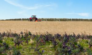 landwirtschaftsbild-1
